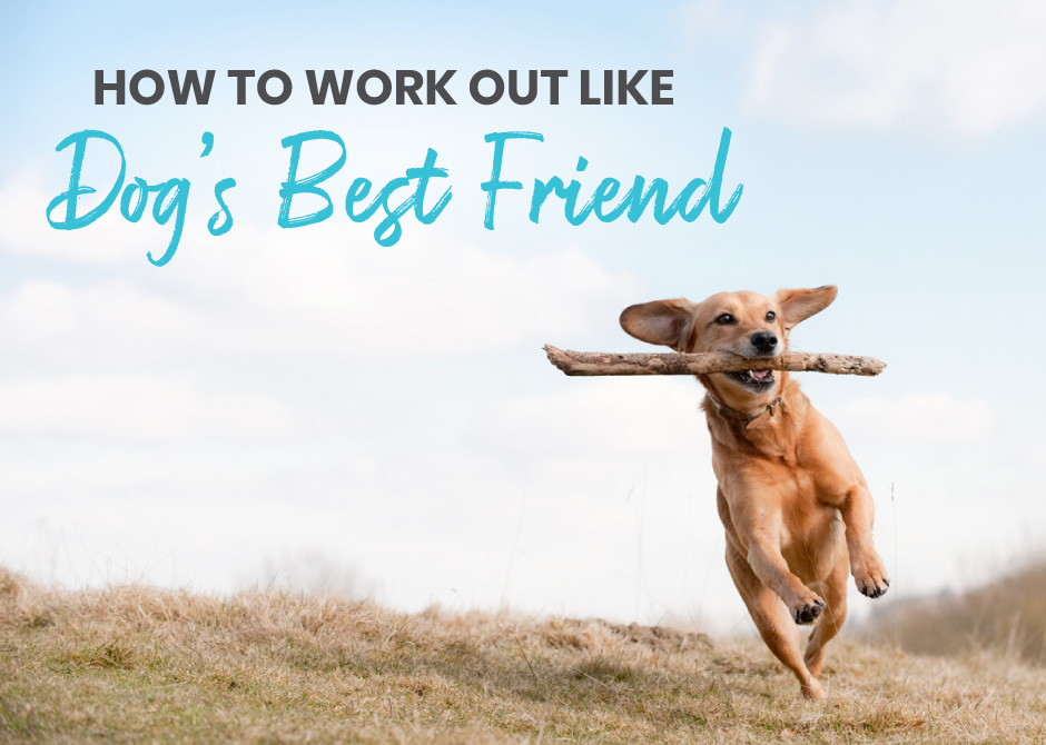 How to work out like dog's best friend